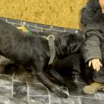 شاهد.. أخطر 10 فصائل كلاب في العالم