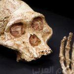 العثور على رفات الهومو ناليدي البشرية المختفية من 300 ألف عام