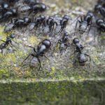 مواطن سعودي يرفع دعوى قضائية على جاره بسبب نملة