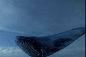 لعبة الحوت الأزرق خطر يهدد بانتحار طالبة بالاسكندرية