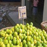 أمين عام الفلاحين: الليمون وصل 100 جنيه بسبب الأغنياء والتجار