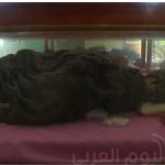 أهوال الحروب.. اليمن يفقد تاريخه بتحلل مومياوات إحدى متاحفه