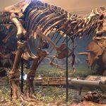 حفيد أخطر ديناصور في العالم يباع بأكثر من مليوني دولار